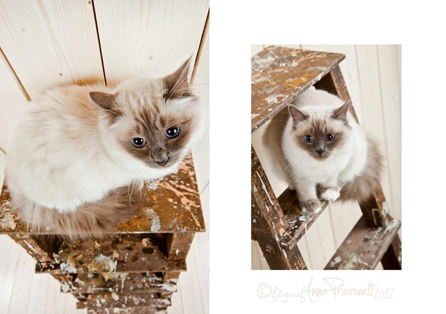 lemmikloom-pildistamine-kass