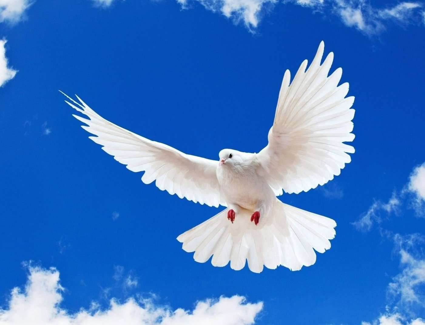 White dove coincidence