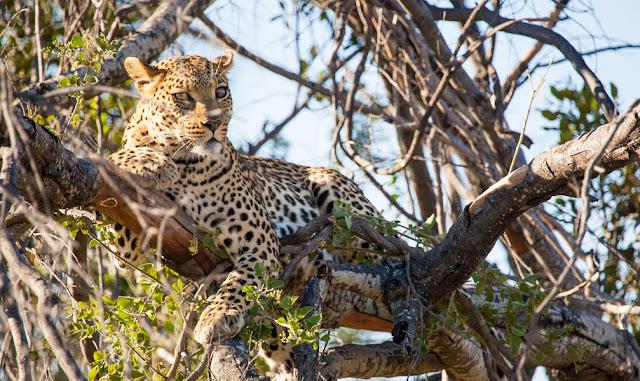 Pom Pom Camp Botswana