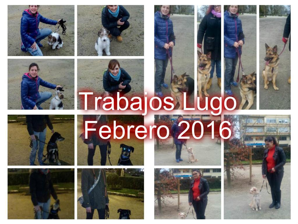 TRABAJOS LUGO FEBRERO 2016