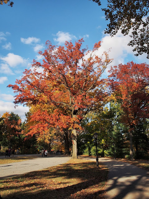 Red and Orange with a Hint of Gold, #fallfoliage, #fallcolors, Central Park, NYC
