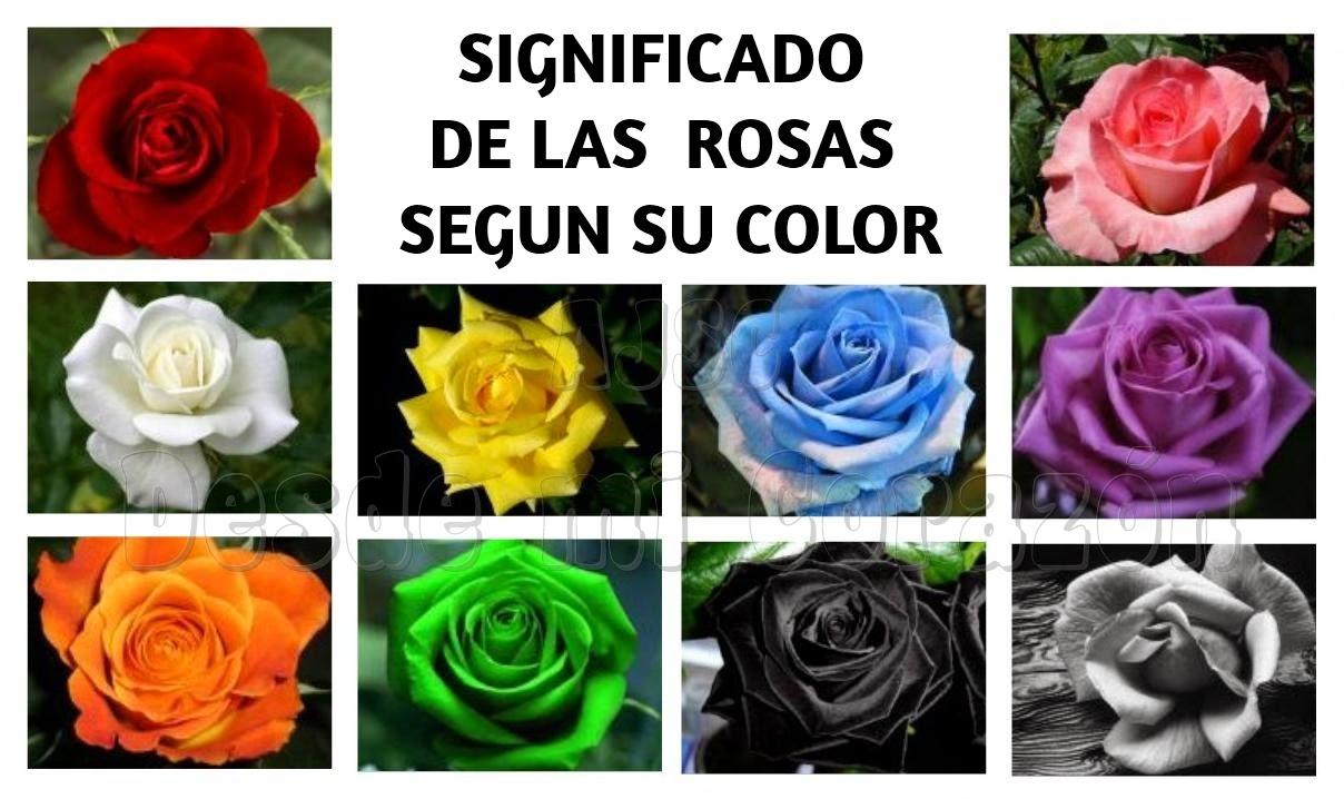 Desde mi coraz n significado de las rosas segun su color - Significado de los colores de las rosas ...