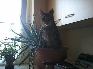 2011 07 04%2B17.37.43 - Eine total verplante Katze...