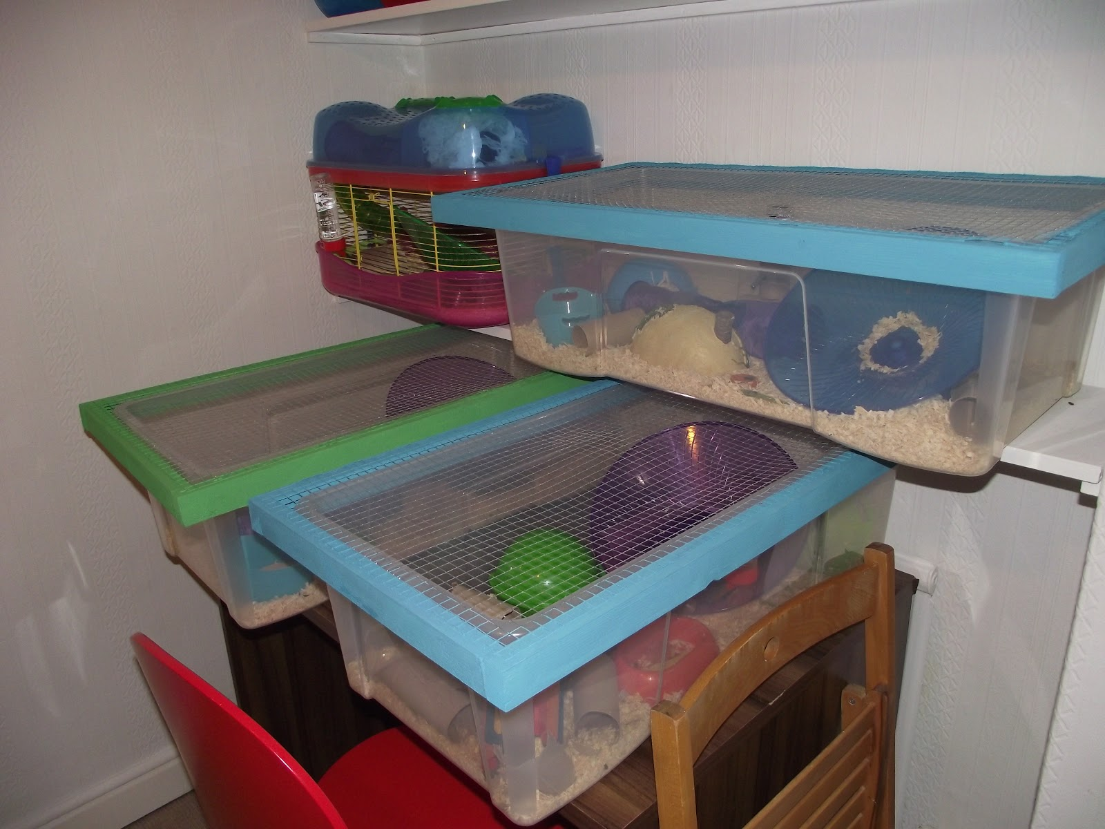 Gallery for syrian hamster bin cages for Diy hamster bin cage
