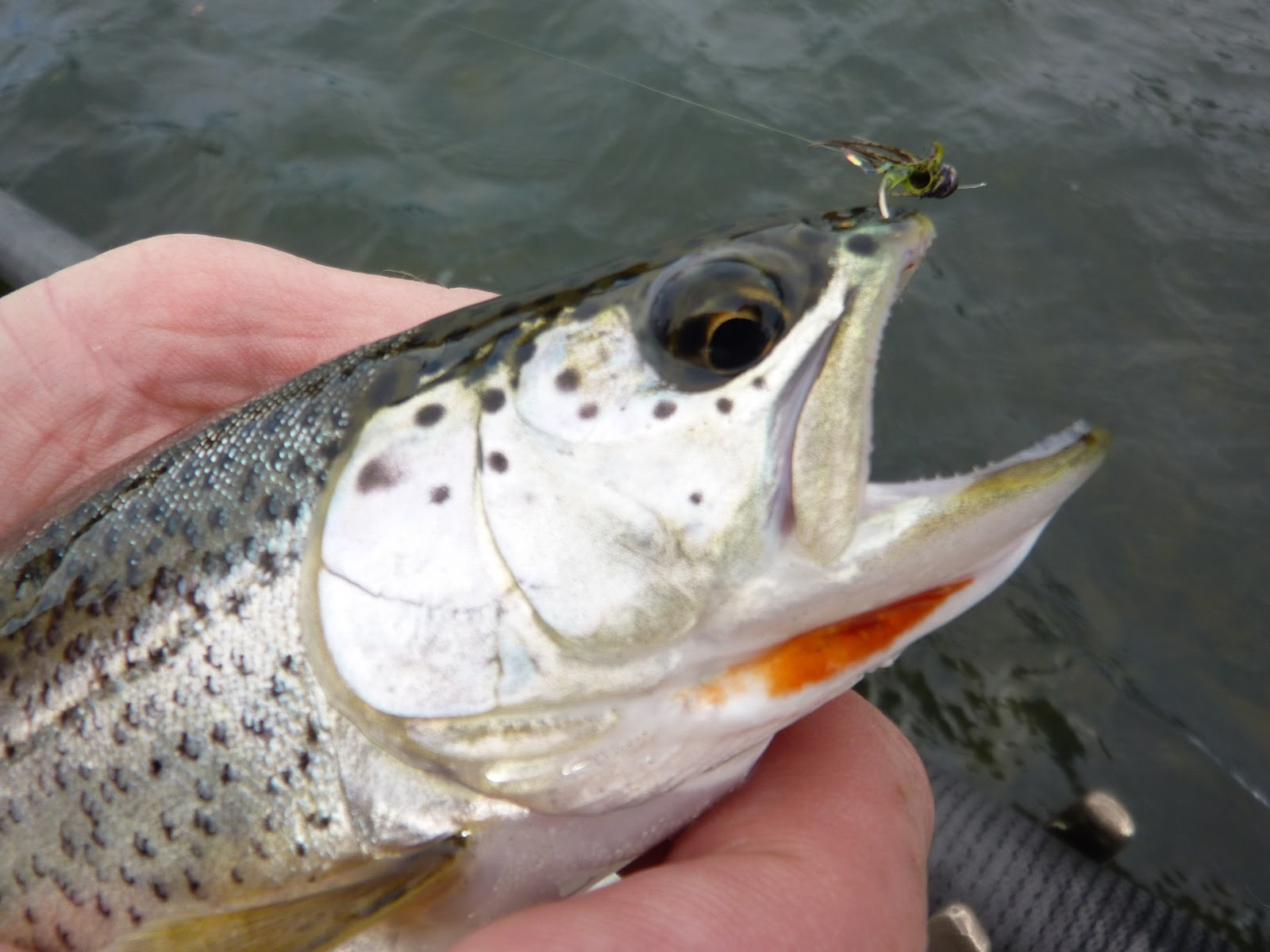Brian marz 39 s fly fishing oregon blog september 2011 for Trout fishing oregon