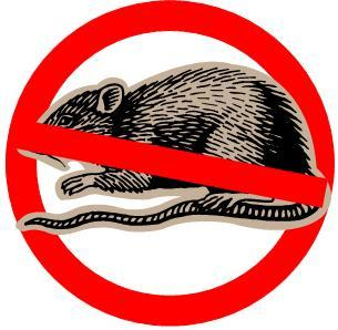 Cara Mengusir Tikus dan Kecoa