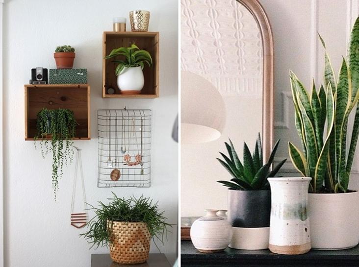 Shibar ita plantas para alegrar el hogar - Decorar con plantas el salon ...