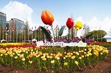 เทศกาลดอกไม้นานาชาติ ที่เมืองโคยาง