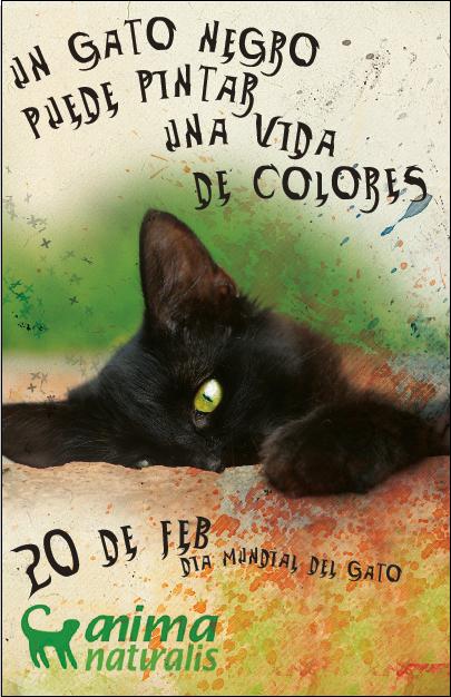 Feliz D 237 A Internacional Del Gato 20 De Febrero 20 Fotos