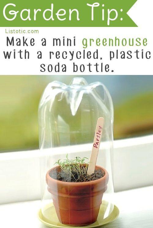 Today's Nature Idea!