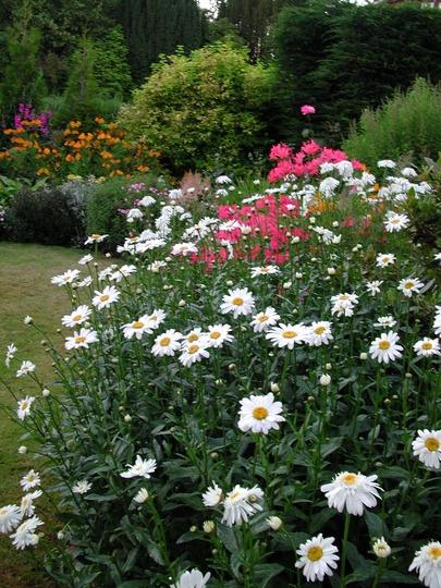plantas bordaduras jardimUm jardim para cuidar Bordaduras floridas