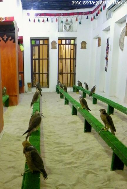 El arte de la cetrería en Qatar