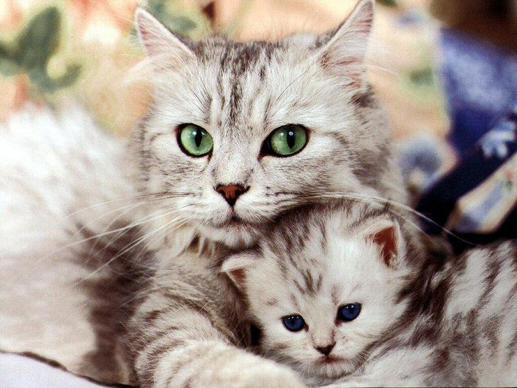 merawat kucing melahirkan