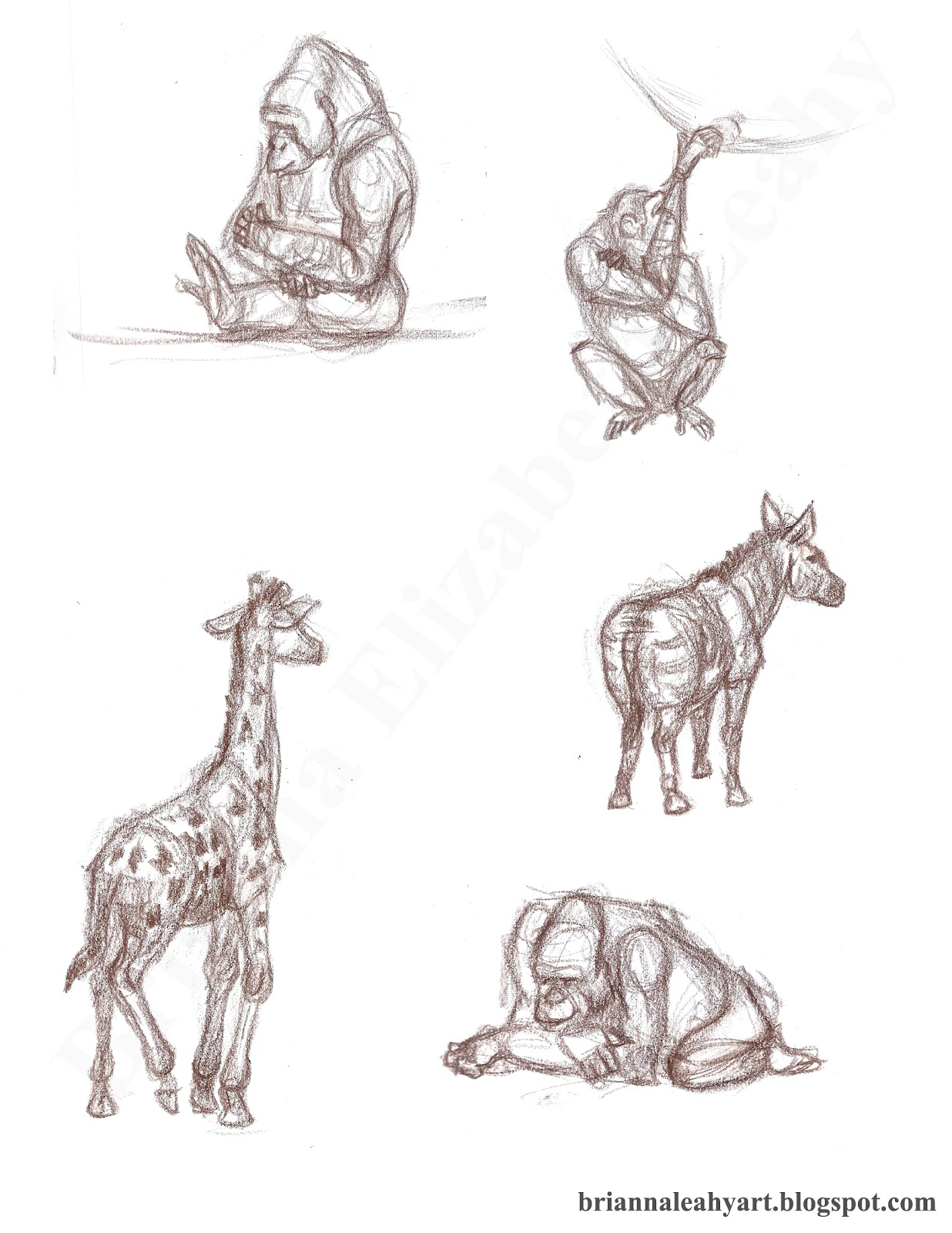 Line Drawings Of Zoo Animals : Art by bri e leahy live animal drawing los angeles zoo