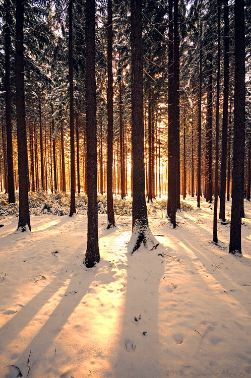 winter wood sunshine