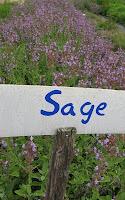 Sage, Flowering
