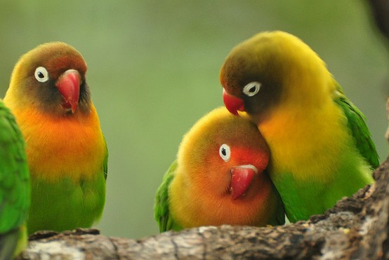 fotos de animales del mundo - #QuokkaSelfie: Fotos con el animal más feliz del mundo son