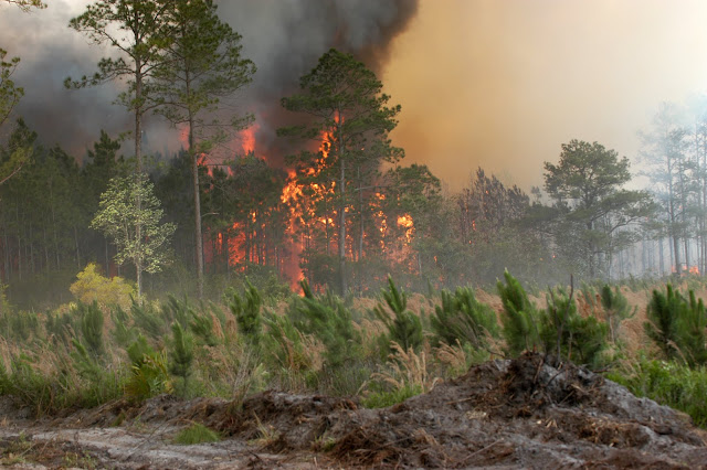Amazing Wild Forest Fires