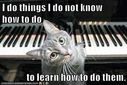 best cat training book