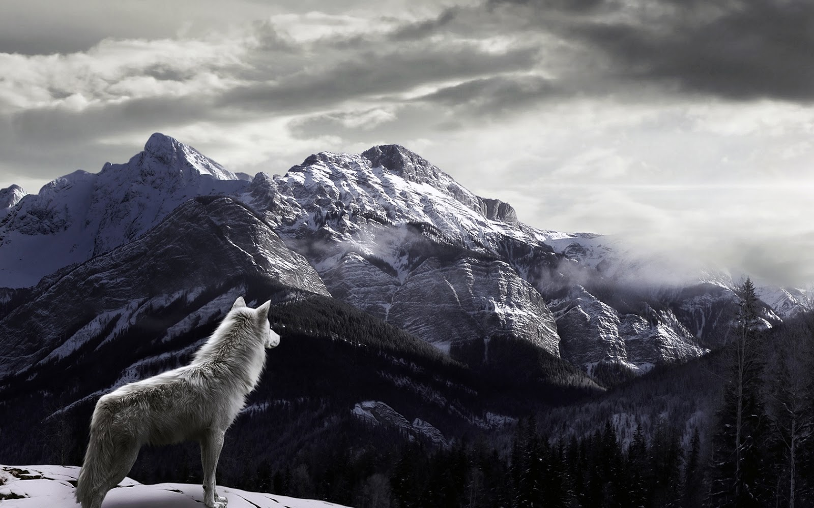 http://4.bp.blogspot.com/-33pMylOCGz4/UKd2mZyLJ5I/AAAAAAAAGKg/19k1ilmxyDA/s1600/Wolf-Watching-Snowy-Fog-Covered-Mountains-HD-Wallpaper.jpg
