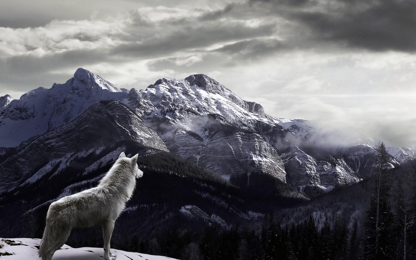 Popular Wallpaper Mountain Fog - Wolf-Watching-Snowy-Fog-Covered-Mountains-HD-Wallpaper  2018_45895.jpg