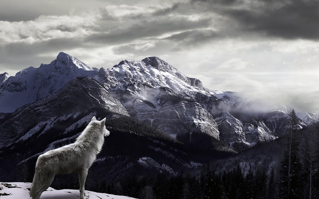 Wolf Watching Fog Covered Snowy Mounts HD Wallpaper