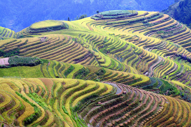 The amazing longsheng rice terraces kuriositas for Terrace farming definition