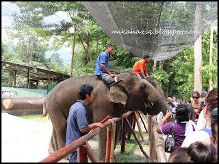 kuala lumpur elephant orphanage
