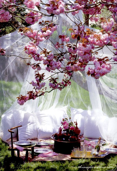 Design ideas romantic outdoor dining under the sakura