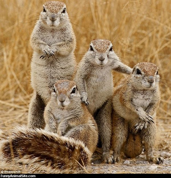 squirrel family