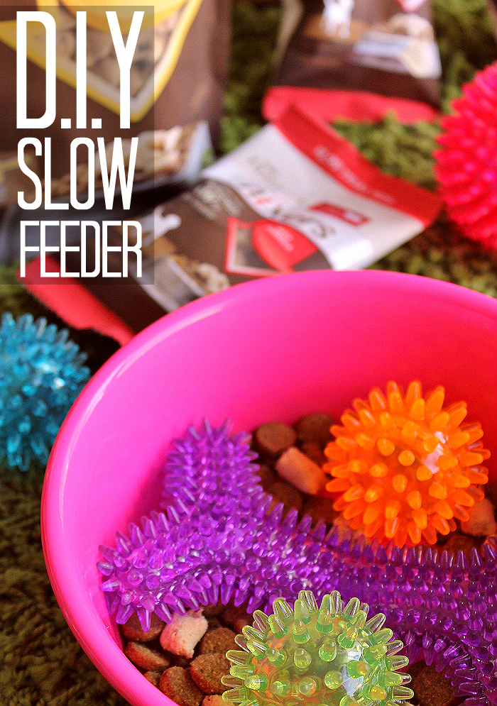 D.I.Y Slow Feeder solution for pets, Use nubbed chew toys as a feeder 'puzzle.'-  Nature's Variety Instinct® Raw Boost Mixers feature protein rich RAW ingredients you can mix in to your pet's everyday food for an ancestral diet boost they crave and need. Pick up a sample pack in 1 of 4 delicious varieties at PetSmart today and #MixItUp. AD