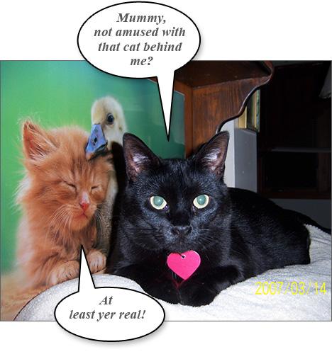 cat+funny