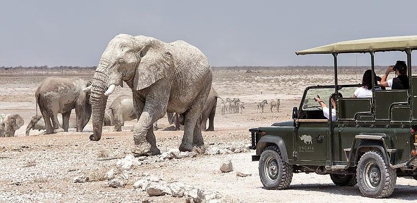 Ongava Tented Camp Etosha Namibia