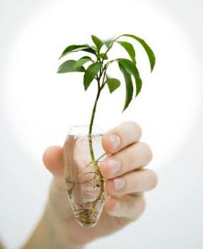 Hidroponia resumen for Importancia de las plantas ornamentales