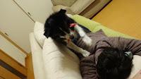 http://border-polly.blogspot.jp/2016/01/blog-post_21.html