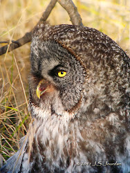 2011 Digiscoping Gallery