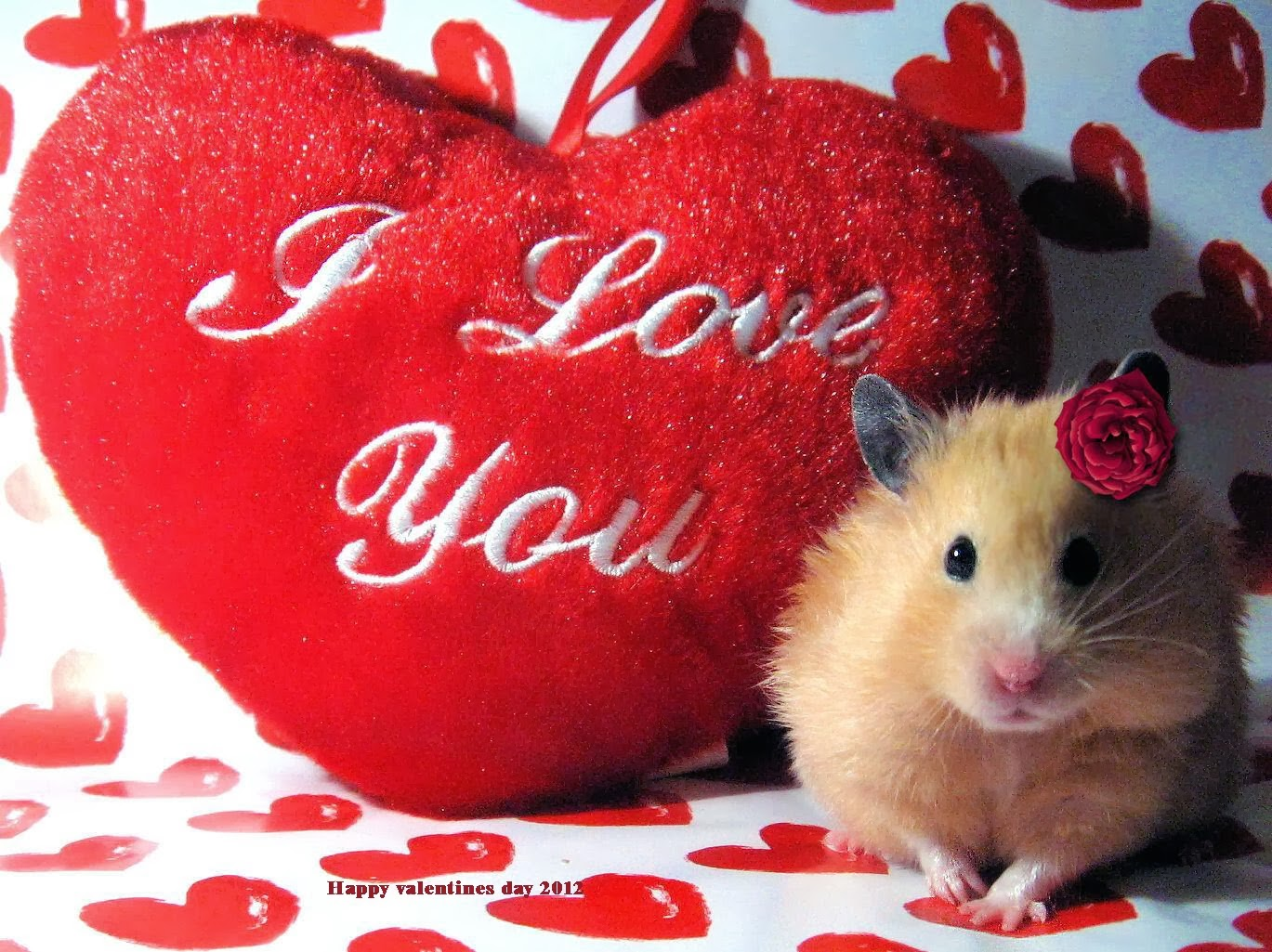 Happy Propose Day Quotes For Boyfriend Girlfriend Lover Husband