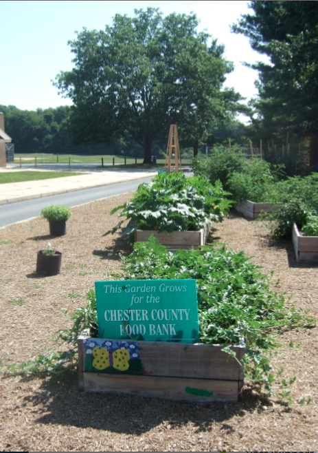 Schools to Watch Ideas: Patton Garden Project