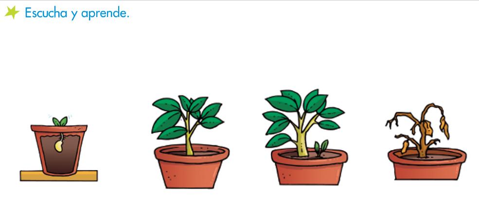 las plantas son seres vivos pues nacen crecen se reproducen y mueren