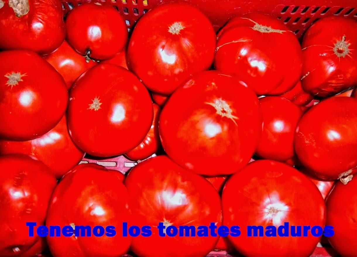 TOMATES EN CONSERVA 1