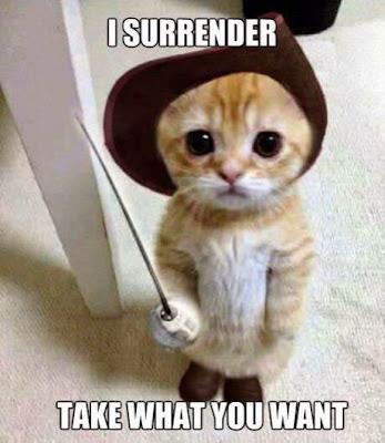 gambar kucing lucu berani