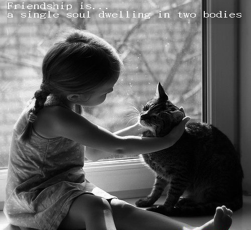 Superb Quotes About Pets And Friendship Unique Friendship Quotes With Cat Images  Being A Friend Quotes Animals