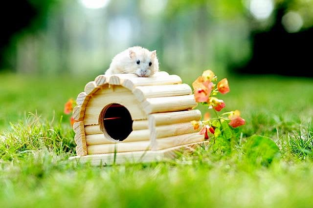 Cute and funny pictures of hamsters 2-2