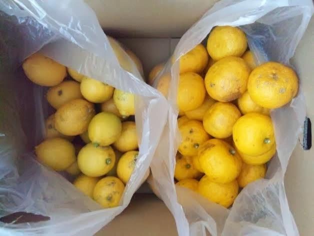 横山農園自然栽培のゆずとレモン