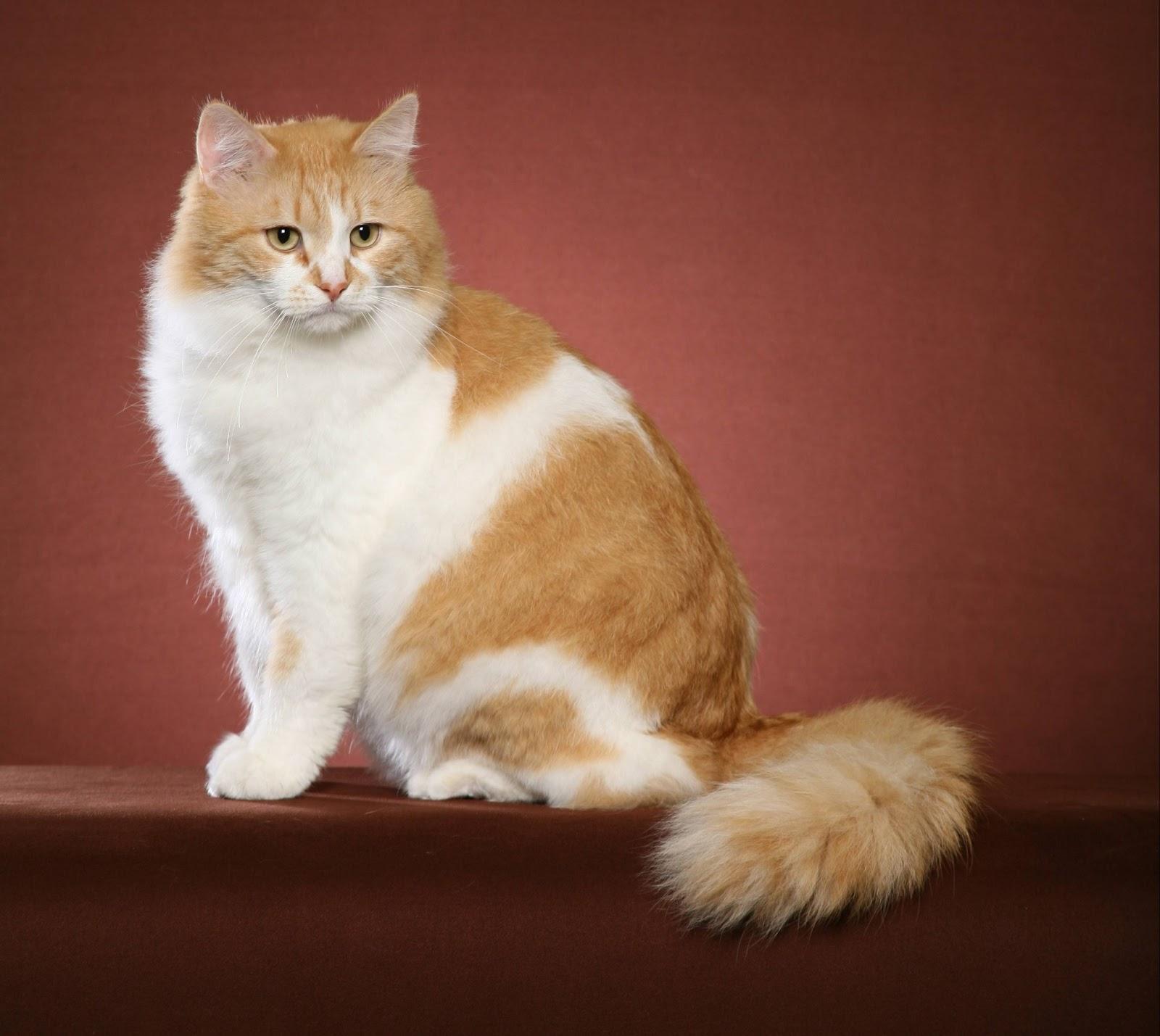 Cat Name Female Orange