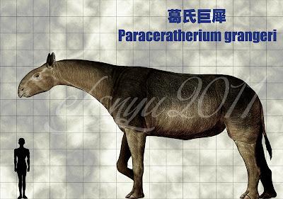perissodactilos gigantes Paraceratherium
