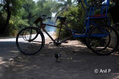 http://4.bp.blogspot.com/-37W4isrv1Yk/TbicjDPZzhI/AAAAAAAACT8/wspH70KgJvc/s400/Cycle_Rickshaw_For_Birdwatchers_Bharatpur_Rajasthan.JPG