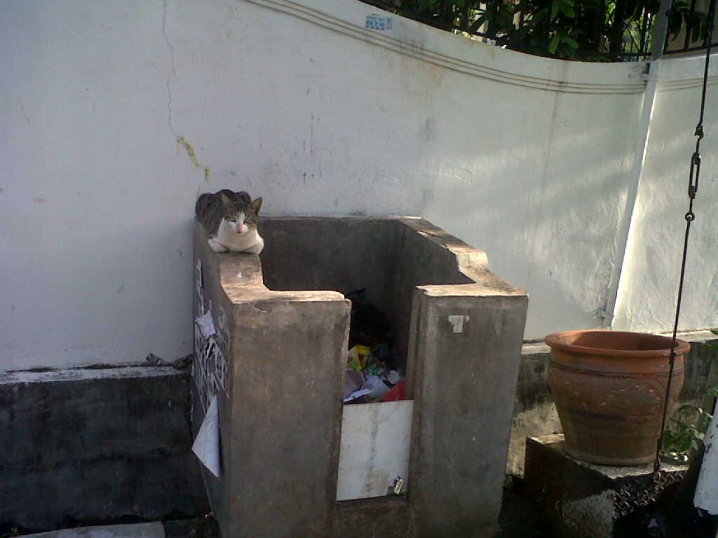 Anatoemon Kucing Penjaga Tong Sampah