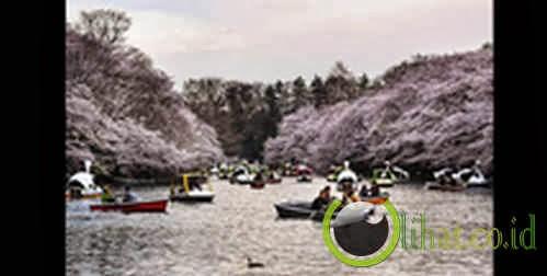 Kisah Asmara Bisa Gagal di Taman Inokashira