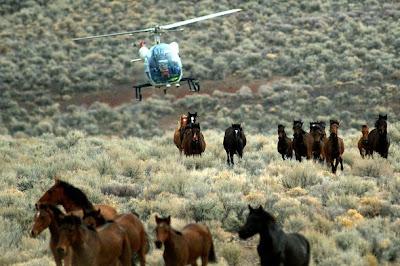 mustangs perseguidos por helicóptero